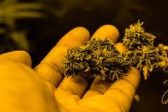 Medizinisches Marihuana Lizenzfreie Stockbilder