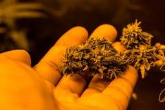 Medizinisches Marihuana Lizenzfreie Stockfotos