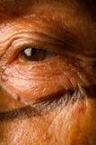 Medizinmann von der einheimischen Gruppe von Santo Domingo Lizenzfreies Stockfoto