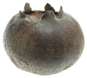 Medlar Royalty Free Stock Images