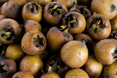Medlar Royalty Free Stock Photography