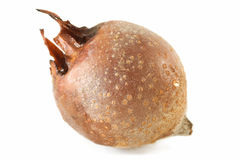 Medlar Royalty Free Stock Photos