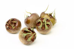 Medlar Stock Photo