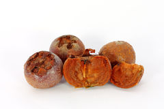 Medlar fruit Royalty Free Stock Photography