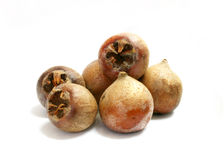 Medlar fruit Stock Photography