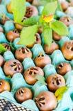 Medlar fruits Royalty Free Stock Images