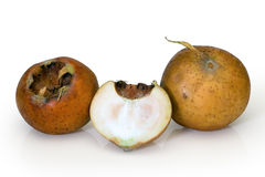 MEDLAR or MISPEL (MESPILUS GERMANICA) Royalty Free Stock Photo