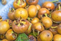 Medlar, old fruit Royalty Free Stock Photography