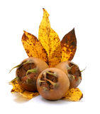Medlars Royalty Free Stock Photos