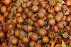 Medlars Royalty Free Stock Photo