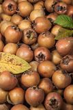 Medlars Royalty Free Stock Image