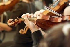 Medlem av klassisk musikorkesteren som spelar fiolen på en konsert