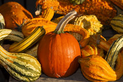 Medley of Colorful Gourds with Pumpkin Stock Image