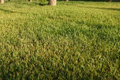 Medow de printemps sur le coucher du soleil Backround Photos libres de droits