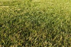 Medow de printemps sur le coucher du soleil Backround Photographie stock libre de droits