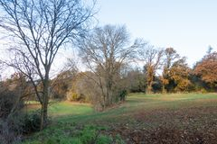 Medterranean winter landscape planted fields. In the mediterranean mild winter climate, the planted wheat sprouts early in december while the oaks slowly turn to Stock Photos