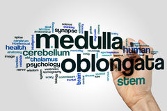 Medulla oblongata word cloud Royalty Free Stock Image
