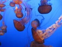 Medusa Fotografia de Stock Royalty Free
