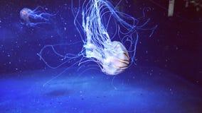 medusa Arkivbilder