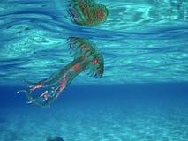 Medusa do noctiluca de Pelagia no mar italiano imagens de stock