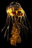 Medusa do ouro do fulgor Fotos de Stock