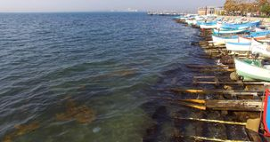Medusa en algas cerca del estacionamiento del barco en Pomorie, Bulgaria Imagen de archivo