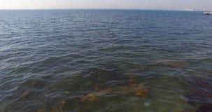Medusa en las aguas frías de la bahía de Burgas en Bulgaria Foto de archivo