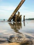 Medusa encalhadas Foto de Stock Royalty Free