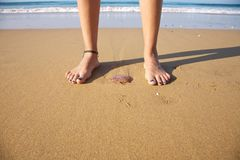 Medusa between feet. Woman foot ready to push a medusa in a beach royalty free stock images