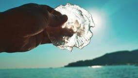 Medusa no fundo do por do sol da praia as geleias brilham com os raios do sol à disposição e o horizonte de mar transparente vídeos de arquivo