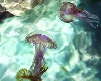 Medusa Stock Image
