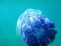 Medusa sob a obscuridade - água azul no mar que nadam afastado Foto de Stock Royalty Free