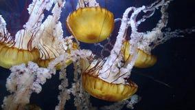medusas filme
