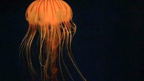 medusas vídeos de arquivo
