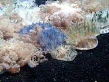 medusas Imagem de Stock