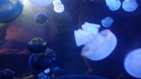 Medusas Fotografía de archivo