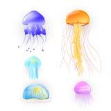 Medusas del vector Foto de archivo libre de regalías