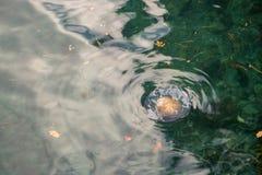 Medusas en el agua foto de archivo libre de regalías