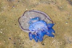 Medusas en la arena Foto de archivo