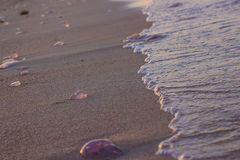 Medusas lavadas en tierra de sea-2 rojo Foto de archivo