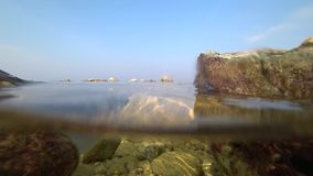 Medusas que nadan por el mar almacen de metraje de vídeo