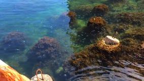 Medusas, rompeolas y alga marina en agua de mar transparente metrajes