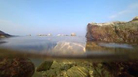 Meduse che nuotano dal mare video d archivio