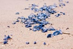 Meduse fragili fotografie stock
