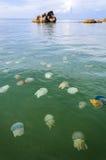 Meduse in mare tailandese Fotografie Stock