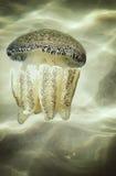 Meduse pericolose in Tailandia Immagini Stock