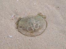 Meduse sulla spiaggia Fotografie Stock