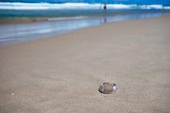 Meduse sulla spiaggia, paradiso dei surfisti fotografie stock libere da diritti