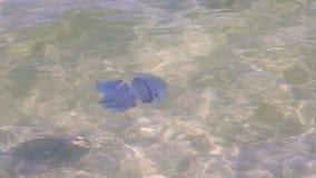 Meduse sulla superficie del mare video d archivio