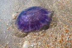 meduza Zdjęcie Royalty Free